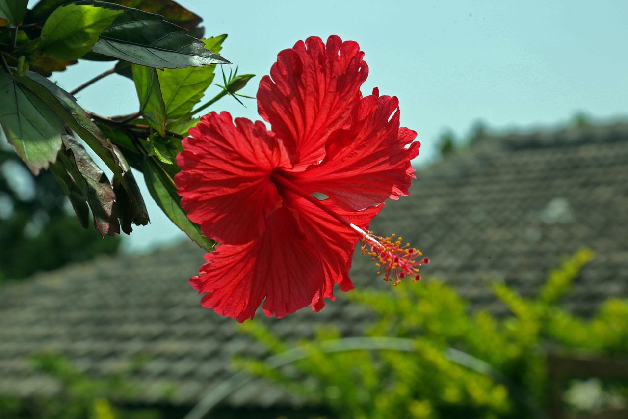 11月だけで沖縄に・・・何回行くんですか?